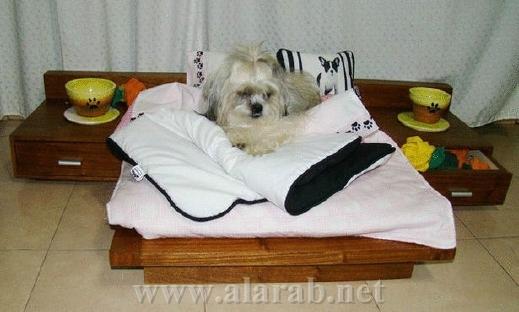 شاهدوا بالصور: غرف نوم فاخرة للحيوانات الأليفة 20120526180214alarab_110512_932