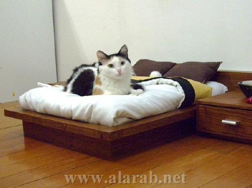 شاهدوا بالصور: غرف نوم فاخرة للحيوانات الأليفة 20120526180214alarab_110512_933