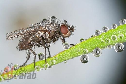 أروع الصور: قطرات الندى تحول قبح الحشرات الى جمال رباني بعدسات افضل المصورين 20120630225225img_515