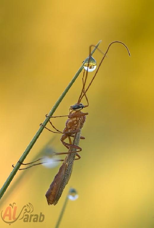 أروع الصور: قطرات الندى تحول قبح الحشرات الى جمال رباني بعدسات افضل المصورين 20120630225226img_498