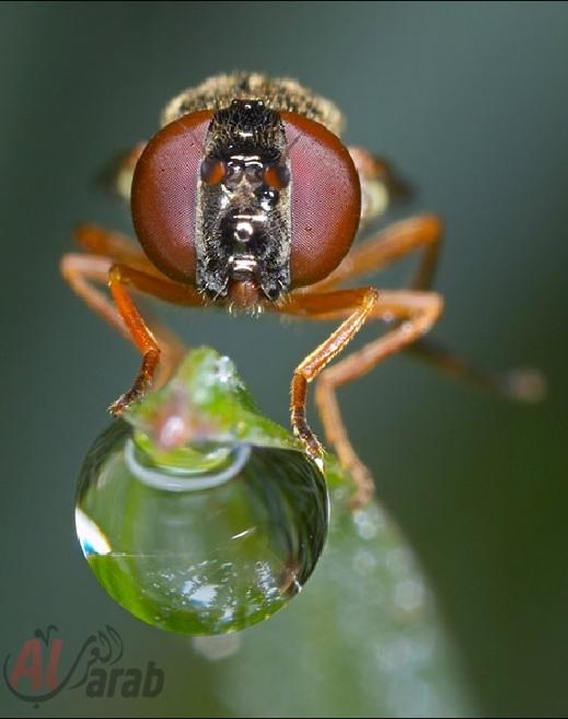 أروع الصور: قطرات الندى تحول قبح الحشرات الى جمال رباني بعدسات افضل المصورين 20120630225226img_508