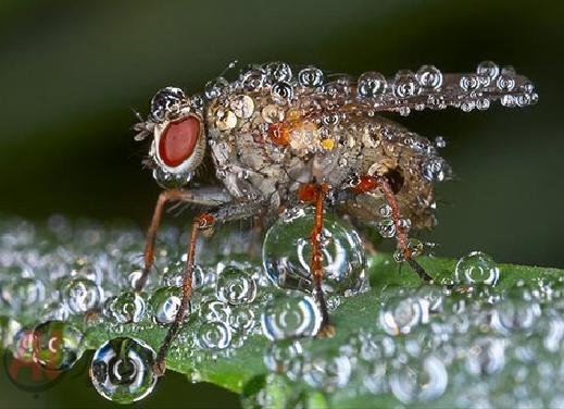 أروع الصور: قطرات الندى تحول قبح الحشرات الى جمال رباني بعدسات افضل المصورين 20120630225227img_511