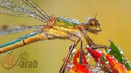 أروع الصور: قطرات الندى تحول قبح الحشرات الى جمال رباني بعدسات افضل المصورين 20120630225228img_501
