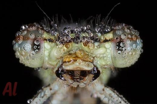 أروع الصور: قطرات الندى تحول قبح الحشرات الى جمال رباني بعدسات افضل المصورين 20120630225228img_507