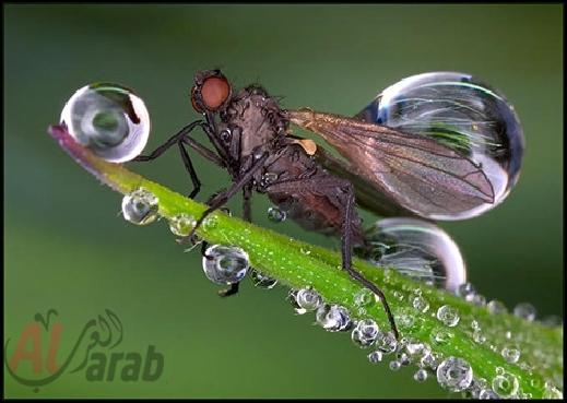 أروع الصور: قطرات الندى تحول قبح الحشرات الى جمال رباني بعدسات افضل المصورين 20120630225228img_514