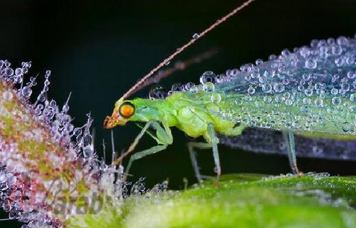 أروع الصور: قطرات الندى تحول قبح الحشرات الى جمال رباني بعدسات افضل المصورين 20120630225228img_518
