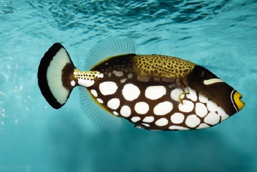 بالصور: أجمل فصائل أسماك في العالم.. إبداع الخالق ومشاهد خلابة من أعماق البحار 20120702223003alarab300612a37