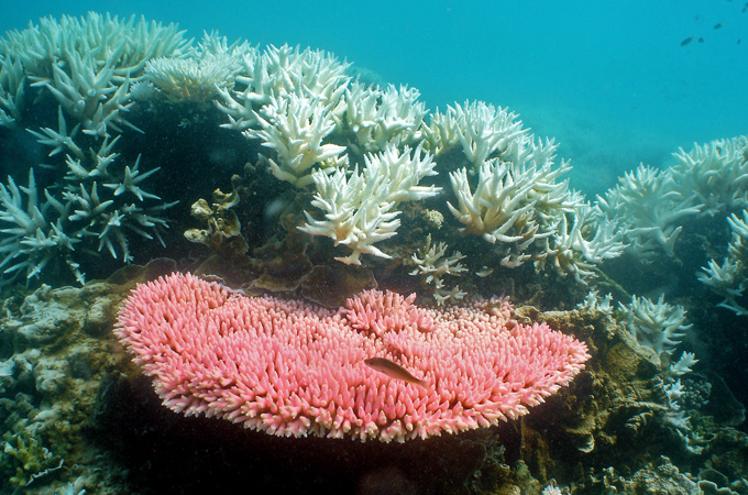Outrage over US bomb drop on Barrier Reef  2013721144447976734_20