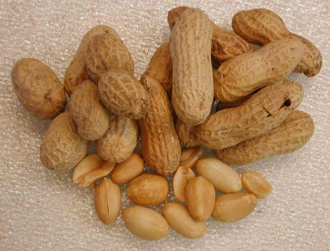 الكاكاو شجرة معمرة وبذورها تشفي الحمى والسعال والكاكاو مدرة للبول ومقوية للقلب والكلى I-peanuts