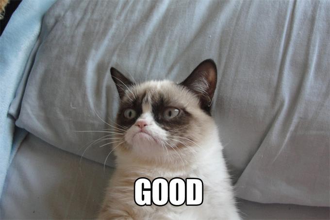 INTP, INFP : les deux mon capitaine ! Td91b95_post-11150-Grumpy-Cat-GOOD-and-NO-memes-