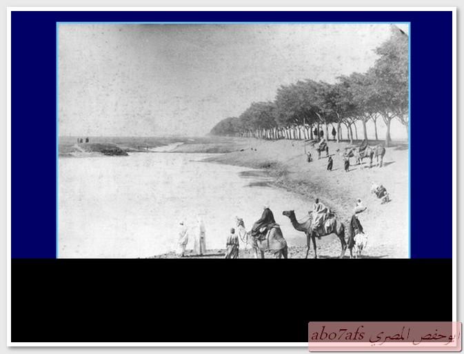 بالصور مصر 1800 م تتحدث   59458_11289696539