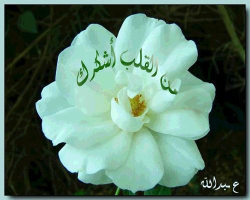 الرسول صلى الله عليه وسلم ينصح الاجيال Picture2