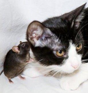صحح معلوماتك ،، معلومات خاطئة تهمك ،،  Mouse_cat