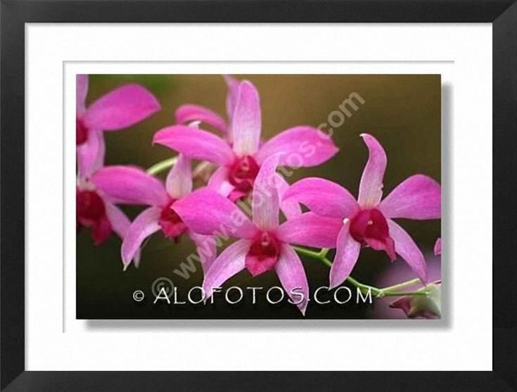 BUSQUEMOS HERMOSAS FLORES - Página 6 0094-orquideas