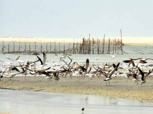 طيور البحر على السواحل  Main_pic-1