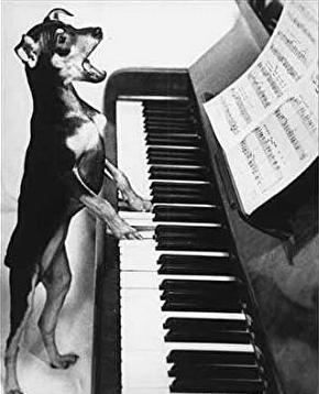 Dashuri, mirësjellje e rrespekt Singing_dog