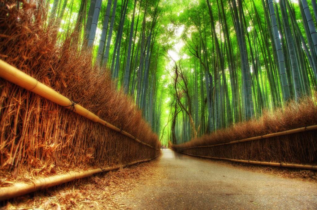 غابات الخيزران في اليابان Bamboo-forest-1024x680