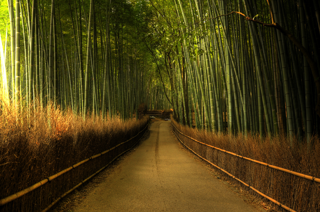 غابات الخيزران في اليابان Sagano-Bamboo-Forest-Japan-Weijie