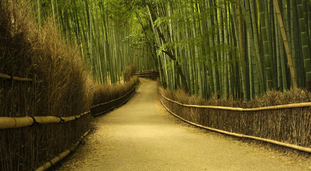 غابات الخيزران في اليابان Sagano-Bamboo-Forest-Japan-sacrelegious-1024x565
