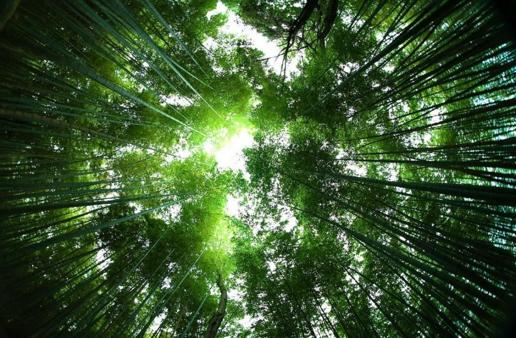 غابات الخيزران في اليابان Sagano-Bamboo-Forest-Japan-soundwave-1024x670