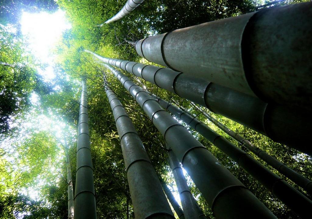 غابات الخيزران في اليابان Sagano-Bamboo-Forest-Japan-stefan-1024x719