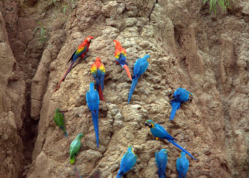 Où suis -je - ajonc - 11 octobre trouvvé par Jovany Oiseaux