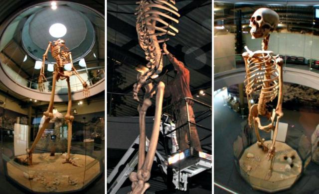 Hidden History revealed: 7-meter-tall GIANT skeletons on display Giant-Skeletons