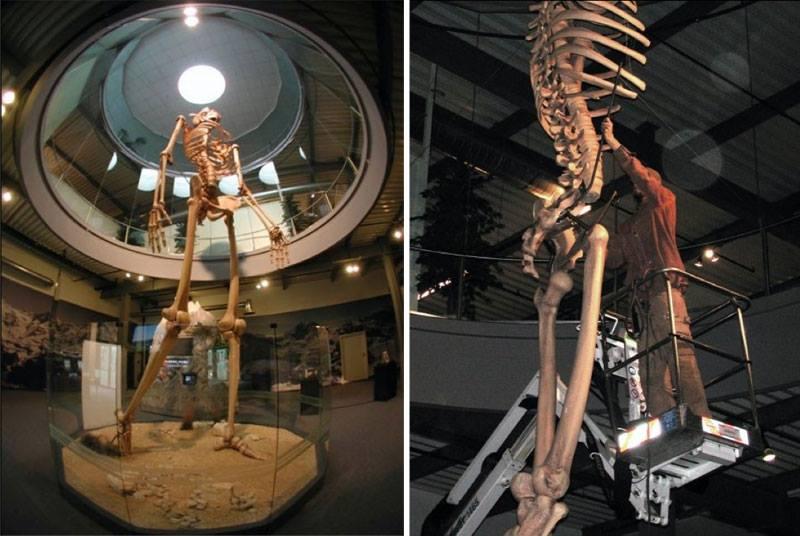 Hidden History revealed: 7-meter-tall GIANT skeletons on display Skeletons