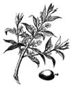 SYMBOLES DE PAIX Olivebranch1