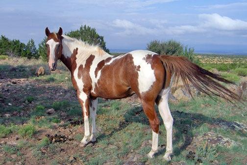 Loomade tutvustused (pildid)  Cherokee