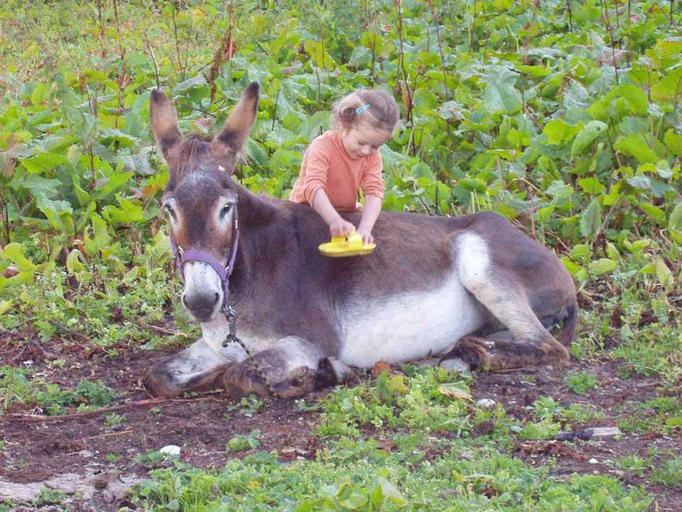 Honneur aux ânes  Slide4
