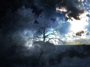 أخاديد الرّحيل / قصة : د. سامية غشير – الجزائر Kellymccormack-treeoflifetreeofdeath-300x225