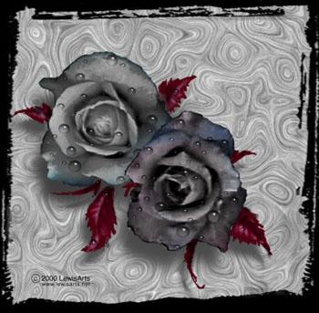 Ruža Zr5