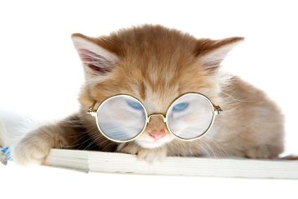 Images Comiques - Page 6 Kitten-met-bril