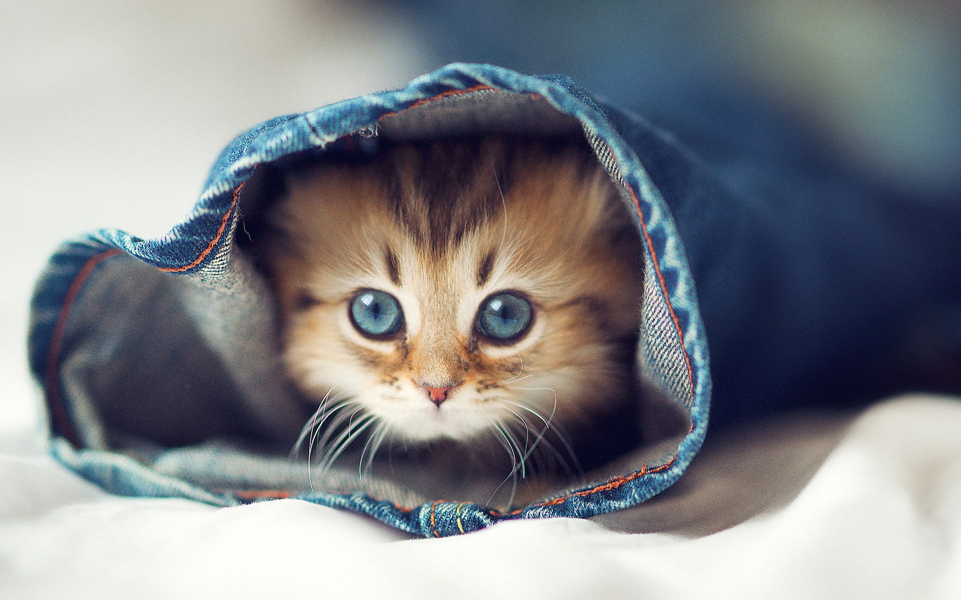 Pune o poza - Pagina 2 Cute-cat-kitten-jeans-the-bed-wallpaper-1920x1200