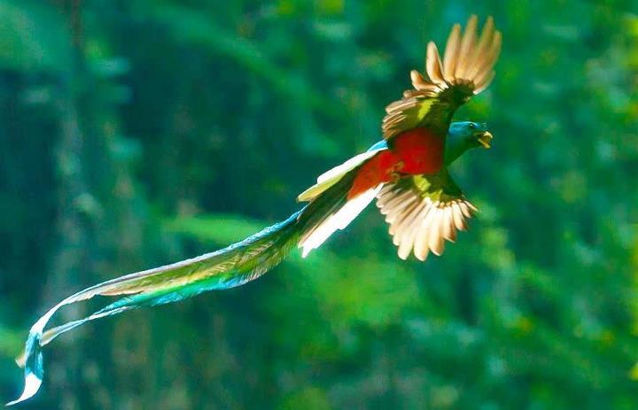 asturias - Miguel-Angel Asturias [Guatemala] El-Quetzal-foto-por-Thorn-Janson-via-TACA-Regional