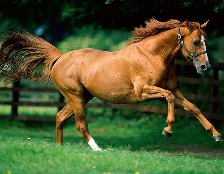 Mercado de Animales Fondos-animales-caballos-p
