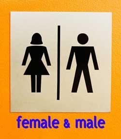 الجندر: Gender 234