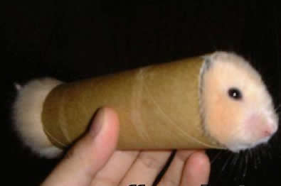 [Jeu] Association d'images - Page 5 Funny-pictures-hamster-toilet-paper-roll