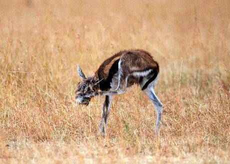 """Strana"" creatura nel parco Masai Mara  0101221171317960_20101221"