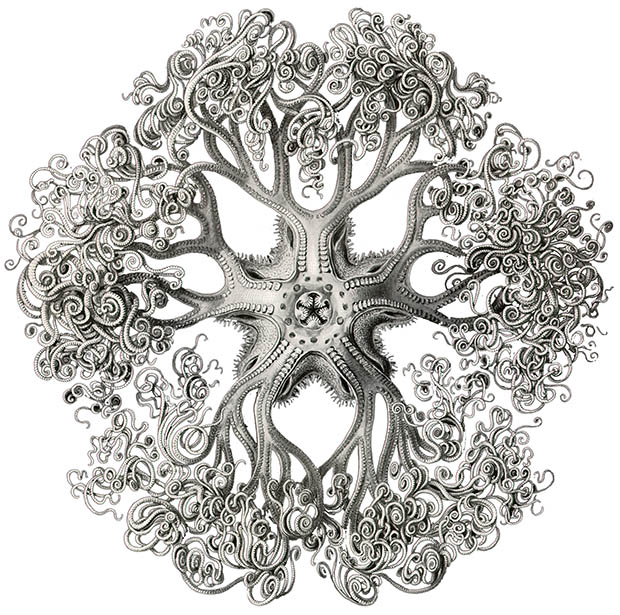 A l'Esperluette. - Page 9 Haeckel_made_it