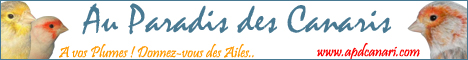 Les transfuges avec papiers Logo_apdcanari