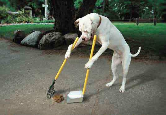 IMAGENES DE PERROS - Página 15 Perro-limpiando-excrementos