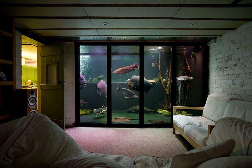 Maior aquário de água doce privado do Reino Unido está fechando 20140118203106_43537
