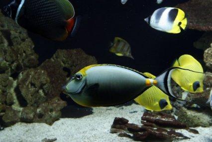 Maior aquário de água doce privado do Reino Unido está fechando 20140118212235_77957