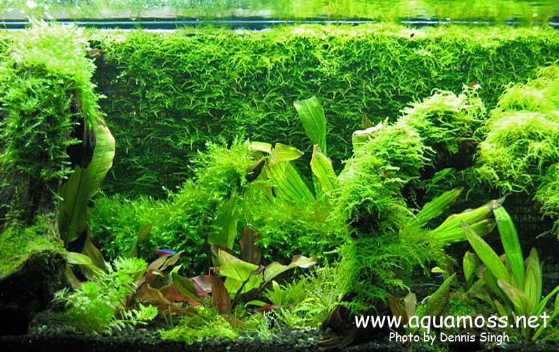 [Décoration] Créer un mur végétal avec de la mousse... Taiwan-Moss-Wall-04