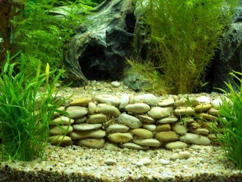 Projet décoration Aquarium avec terrasse et grotte _terrasse6