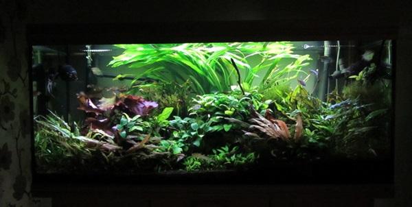 O aquário low-tech (baixa manutenção e plantas pouco exigentes).  Low-tech04