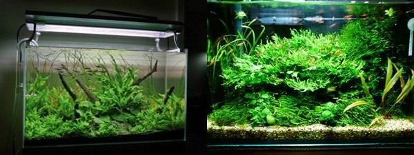 O aquário low-tech (baixa manutenção e plantas pouco exigentes).  Low00