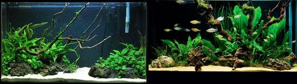 O aquário low-tech (baixa manutenção e plantas pouco exigentes).  Low01